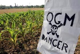OGM en 2008